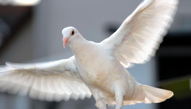 Gefahrlicher Trend Warum Sie Bei Der Hochzeit Auf Weisse Tauben Ver