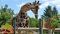 Wiener Zoo - 25 Jahre! Happy Birthday, Kimbar