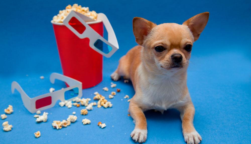 Filmtipp Die 19 Besten Hunde Filme Für Herrchen Frauchen Traile