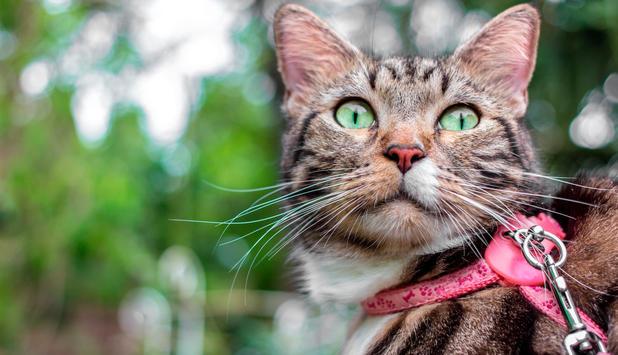 wie kann man katzen abnehmen lassen