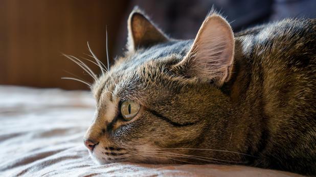 wie lange leben katzen mit diabetes research