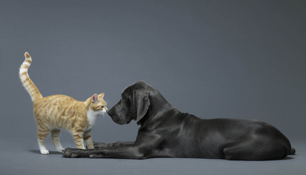 Dog And Cat Touching Noses