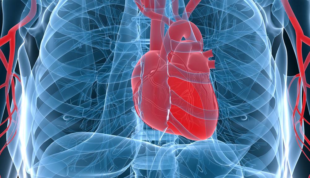 Großartig Wo Im Menschlichen Körper Das Herz Befindet Zeitgenössisch ...