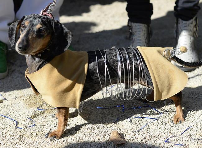 Halloween Hunde News At