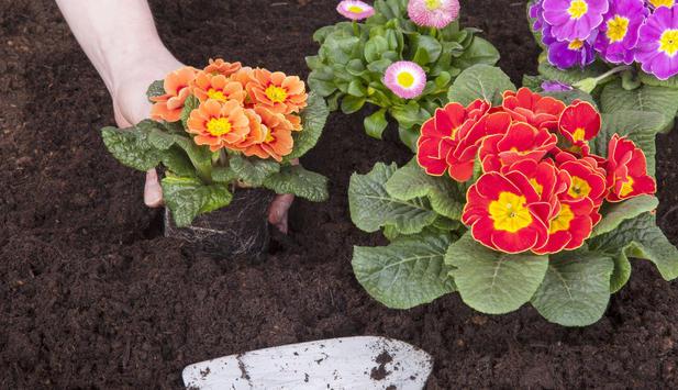 Gartenratgeber - Gartenarbeit Im Frühling ? News.at Die Gartenarbeit Im Fruhling