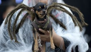 PHILIPPINES-ANIMAL-SOCIETY-RELIGION-ALL SOULS DAY Dogparade Halloween Manila