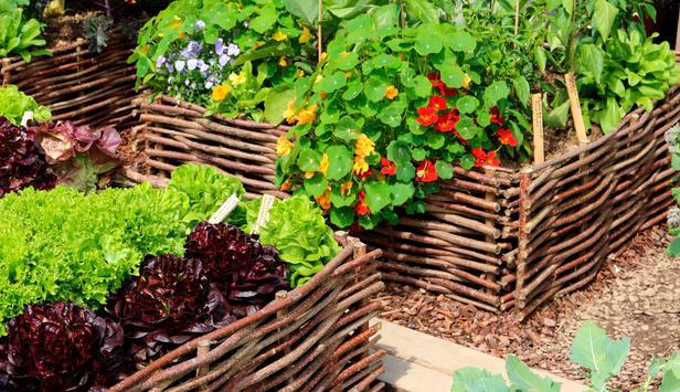 Gärtnern Wie Man Ein Hochbeet Richtig Befüllt Newsat