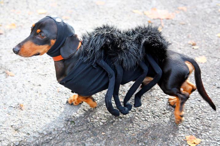 Halloween 2015 Hunde In Schaurigen Kostumen News At