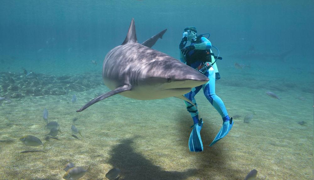 Haie: 7 erstaunliche Fakten • NEWS.AT