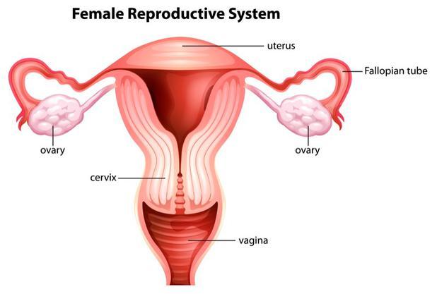 Mehr sperma produzieren hausmittel