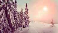 Grüne Weihnachten - Klimaerwärmung: Schnee war gestern